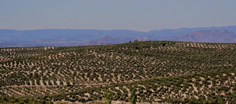 COAG Jaén sostiene que las salidas de aceite al mercado en marzo hacen prever el enlace de campaña más bajo de los últimos años