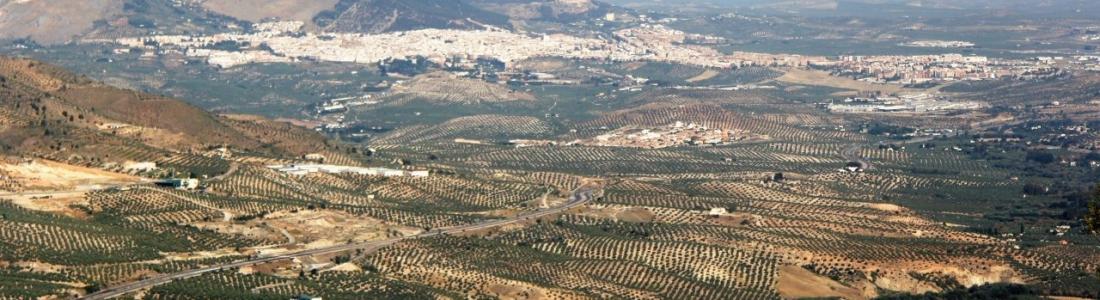 Casi 400.000 toneladas de aceite de oliva se han producido en enero y las salidas al mercado se estiman en 111.000