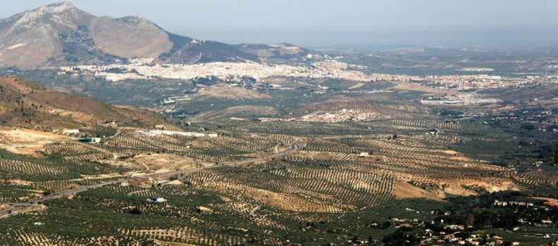 La Diputación Jaén aprueba una moción para pedir al Gobierno mejoras fiscales para los olivareros