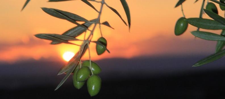 El Ministerio de Agricultura encarga la elaboración de la cadena de valor del aceite de oliva virgen extra a la Universidad de Jaén