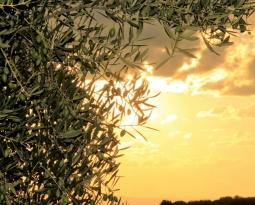 Agricultura abre la convocatoria de ayudas a las agroindustrias con una dotación de 68,6 millones