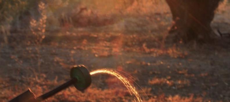 COAG Andalucía alerta de las consecuencias negativas de la sequía en los cultivos