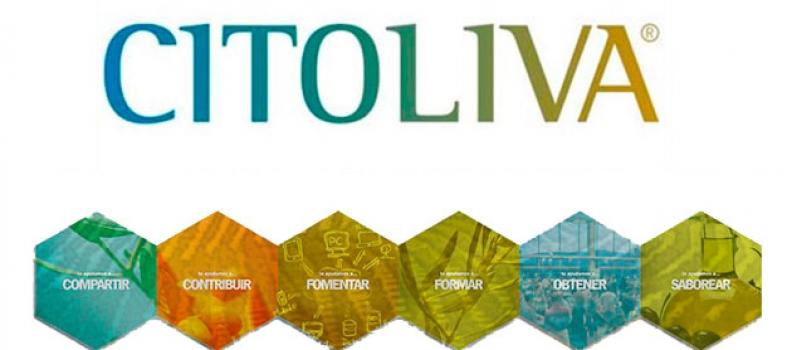 Citoliva revalida en 2019 el liderazgo de la provincia en materia de financiación europea a la I+D+i