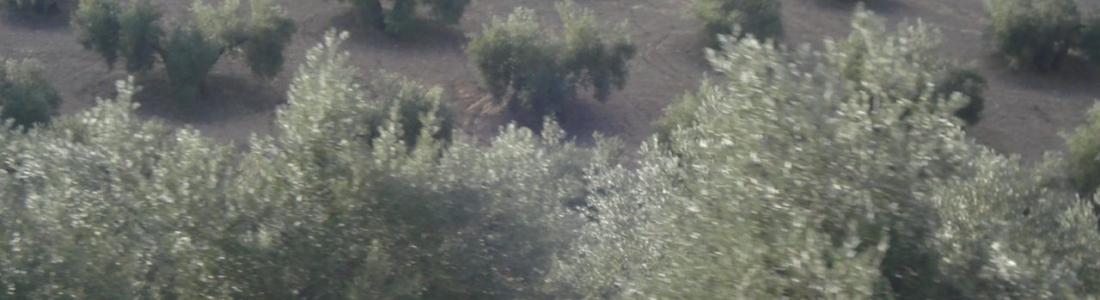 El PSOE pide en el Congreso que el olivar en pendiente sea incluido en los sectores de pagos acoplados de la PAC