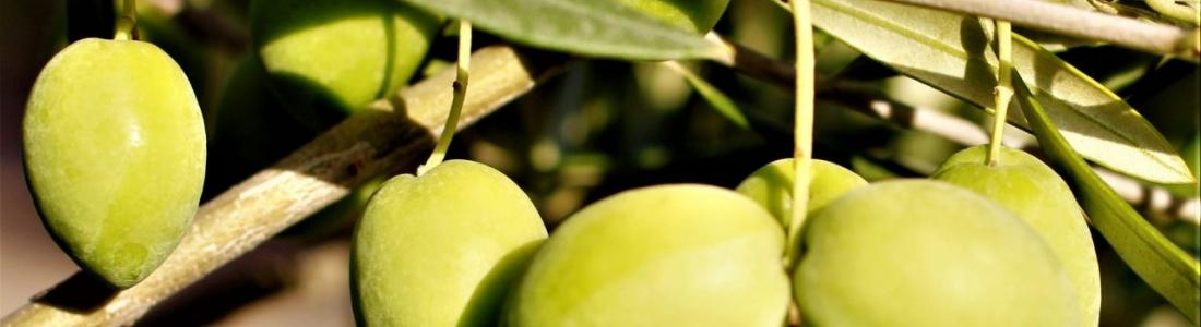 Cooperativas Agro-alimentarias de Andalucía urge a aprobar la autorregulación de la oferta en el sector oleícola