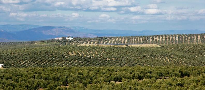 El PP exige a Planas que se adopten medidas en favor del olivar y del aceite