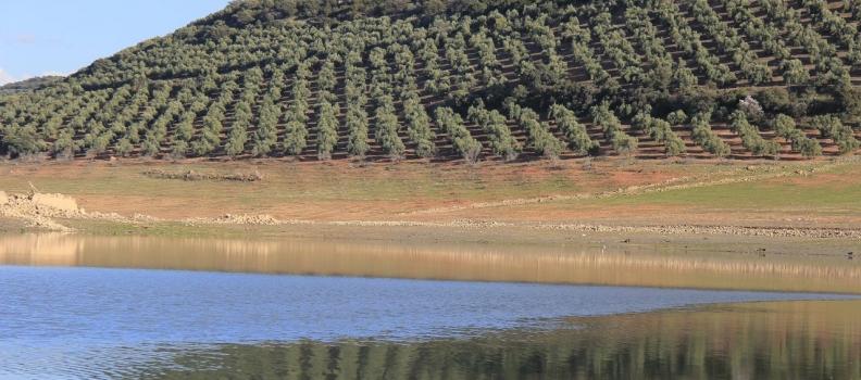 UPA Jaén muestra su preocupación porque la escasez de recursos hídricos y precipitaciones perjudique la campaña de riegos en el olivar