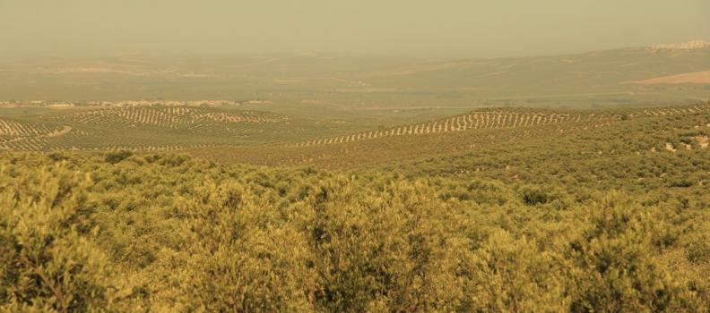 Planas aboga por crear un programa sectorial específico para el aceite de oliva y la aceituna de mesa