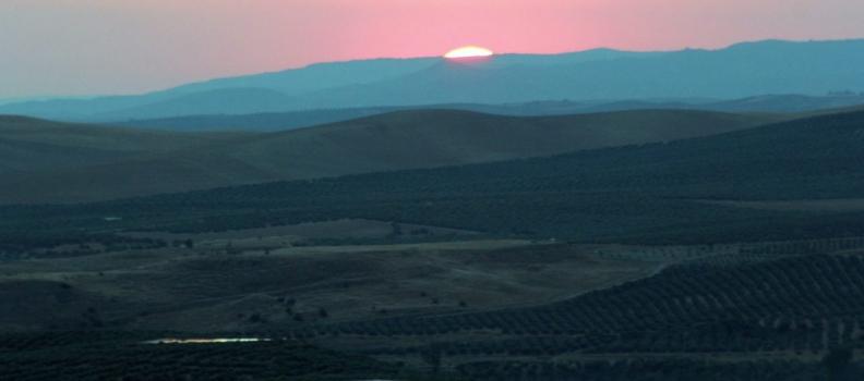Campo de Baeza, un mar de olivos para la Humanidad