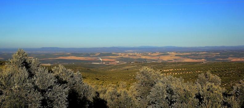La producción de aceite de oliva alcanzó en diciembre casi 454.000 toneladas