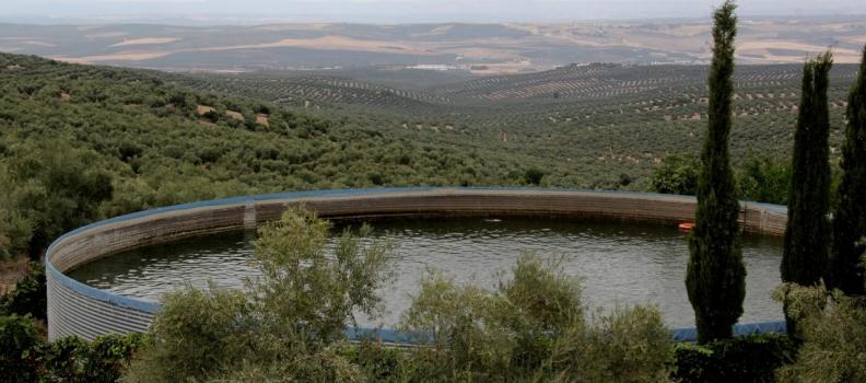 UPA Jaén reclama a la CHG que todos los regantes con autorización puedan ser beneficiarios del riego extraordinario y de apoyo en la campaña 2019