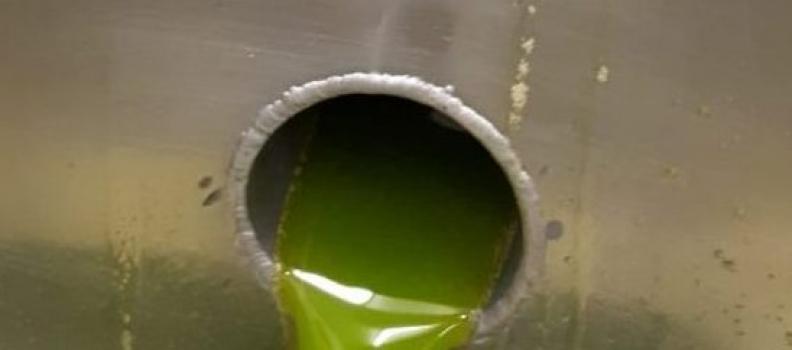 El aceite de oliva producido hasta diciembre no llega aún a la mitad de lo estimado