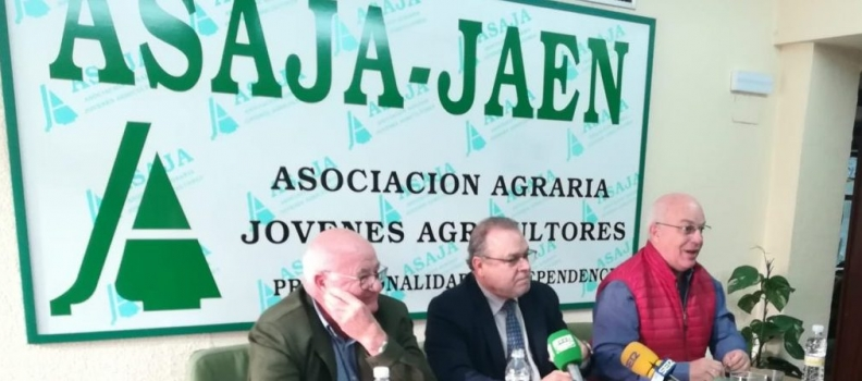 """ASAJA alude a """"impresiones"""" de menos cosecha en Jaén, pero no contradice las cifras del aforo y cree que España se situará en el entorno de 1.250.000 toneladas de aceite de oliva"""