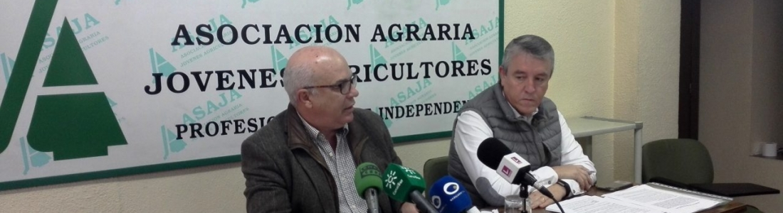 ASAJA-Jaén valora la campaña de «buenos precios» del aceite de oliva