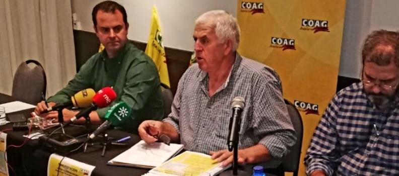 """COAG-Andalucía asegura que """"está en peligro el olivar tradicional, centenario y sostenible"""""""