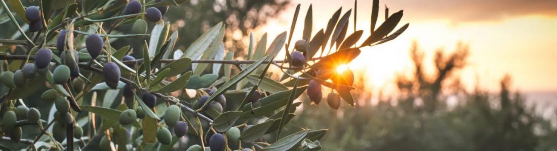 Una treintena de miembros del COI visitará la feria World Olive Oil Exhibition
