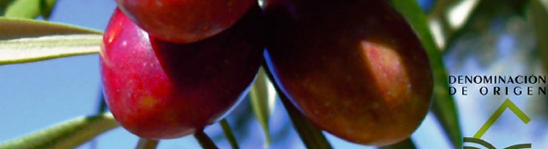 La DOP Sierra de Cazorla prevé una cosecha media de aceite de oliva, unas 40.000 toneladas