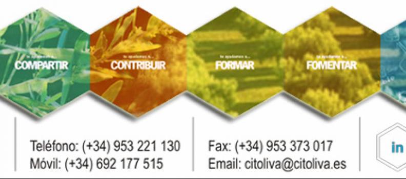 Citoliva utiliza de manera pionera «la mímica» para acercar la cultura del aceite de oliva