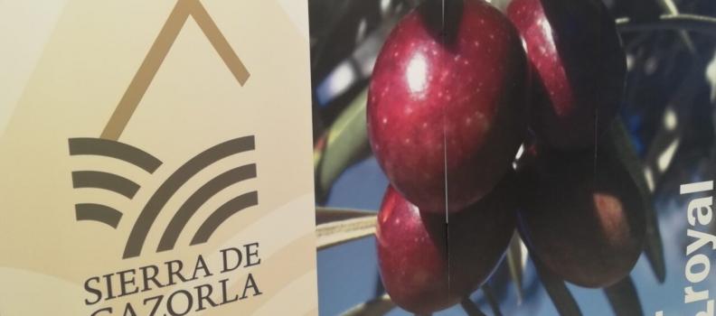 La DOP Sierra de Cazorla alcanza una producción de 45.000 toneladas de aceite procedente de 237.000 de aceituna y con un rendimiento medio del 19,13%