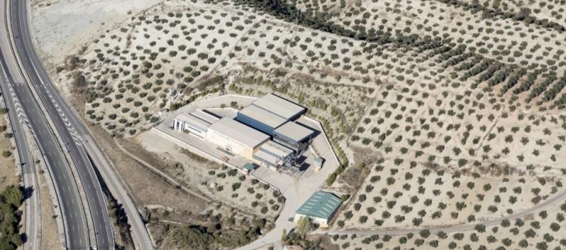 La SCA Nuestra Señora de la Cabeza de Campillo de Arenas ha elaborado casi 50.000 kilos de AOVE de cosecha temprana