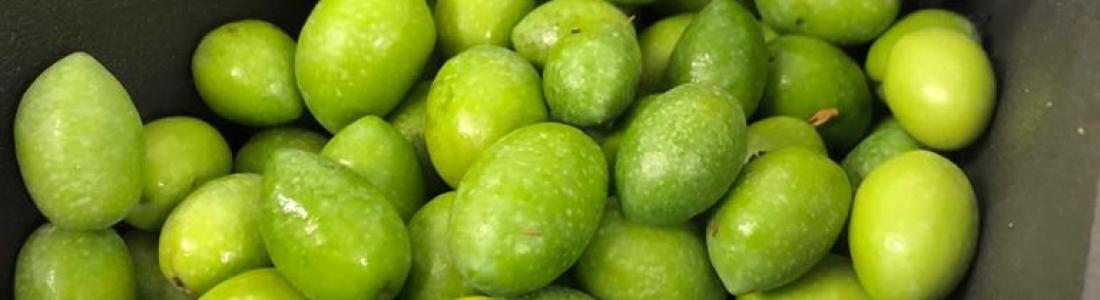 La DO Sierra de Segura finaliza los tratamientos colectivos contra la mosca del olivo