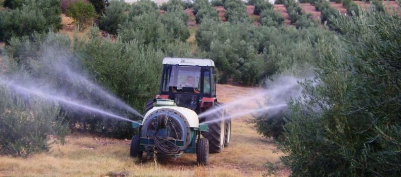 La Denominación de Origen Sierra de Segura inicia los tratamientos terrestres contra plaga de la mosca del olivo