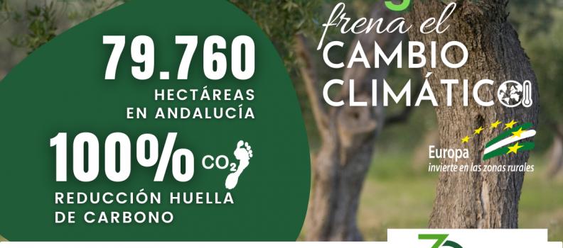 Ecovalia destaca la contribución del olivar ecológico andaluz en la lucha contra el cambio climático