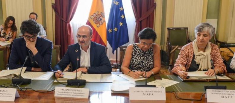 El Consejo General de Organizaciones Interprofesionales Agroalimentarias informa favorablemente sobre las nuevas extensiones de norma del sector del aceite de oliva