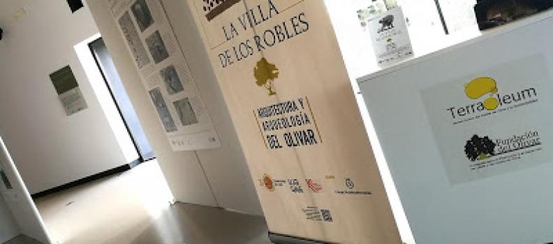 Una exposición viaja a la Bética Romana a través de la industria oleícola en el Jaén del siglo I