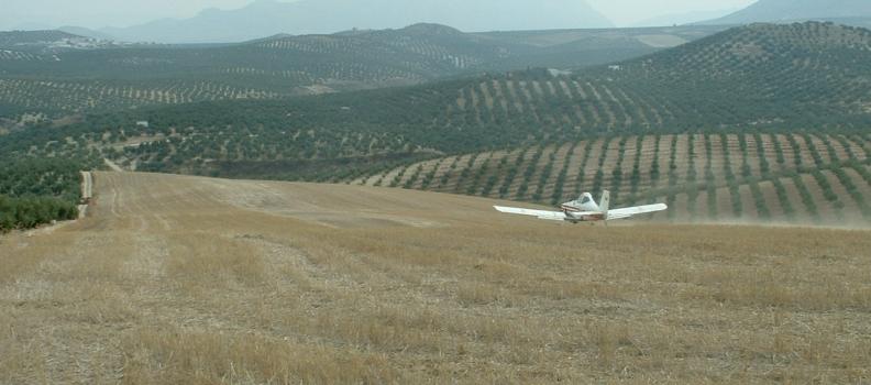 La DO Sierra Mágina actuará contra la mosca del olivo para preservar la calidad