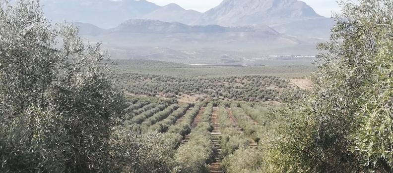 El Ministerio de Agricultura prorroga el plazo para presentar la solicitud única de ayudas de la PAC 2020