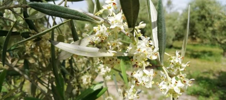 El Hospital de Jaén finaliza el recuento de niveles de polen esta temporada