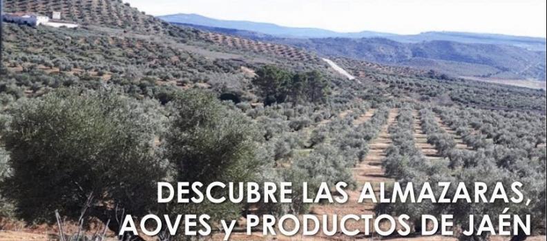 El Centro de Interpretación Olivar y Aceite impulsa una nueva edición de Rutas del aceite de Jaén para promocionar el oleoturismo