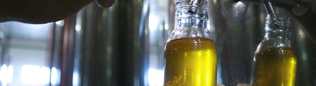 La cooperativa San Vicente de Mogón cierra la campaña con un 90% de aceite de oliva virgen extra