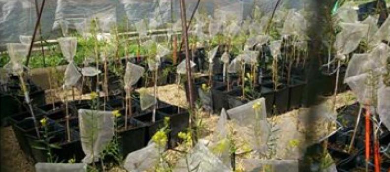 Un estudio de la UJA señala que el cambio climático podría poner en riesgo los actuales cultivos de semillas oleaginosas en Europa