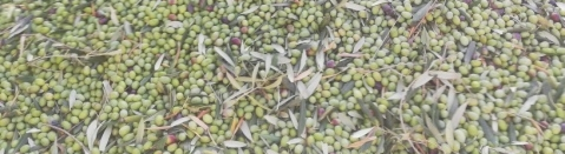 FIAB pide colaboración al Gobierno y a la UE para impedir los aranceles a alimentos y bebidas españoles de Estados Unidos