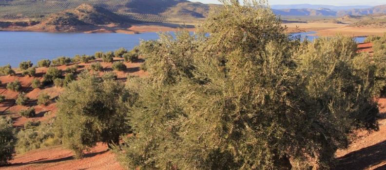 UPA Jaén muestra su preocupación porque arranque el año hidrológico en situación de sequía con los pantanos solo al 31,65% de su capacidad