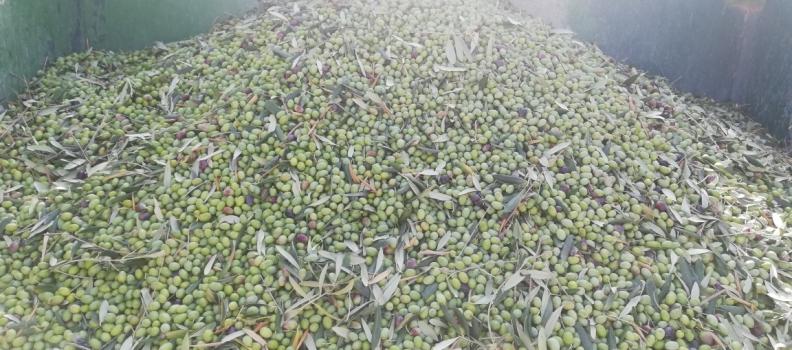 España ha comercializado 200.000 toneladas de aceite de oliva más que en la campaña 2017/2018