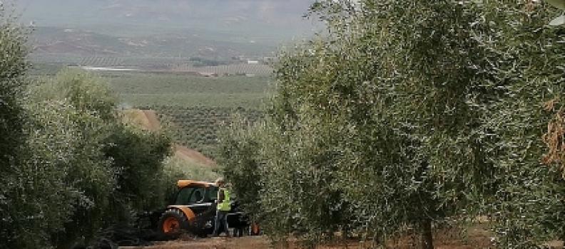 Una veintena de técnicos italianos participa en un grupo de trabajo sobre el sector oleícola y su protección en la sede Antonio Machado de Baeza