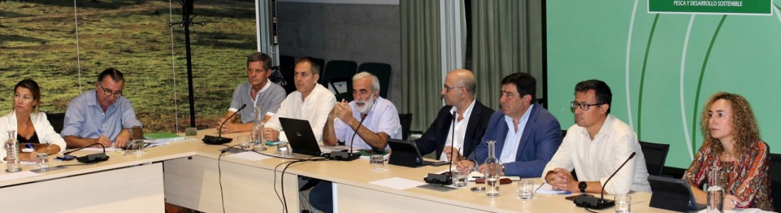 """La Junta prevé que la campaña 2019-2020 alcance las 397.300 toneladas de aceituna de mesa de """"gran calidad"""" y calibre"""