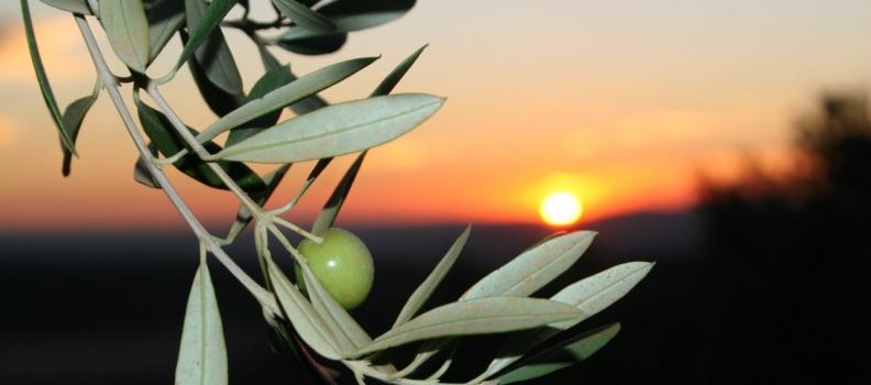 La producción ecológica jiennense se promocionará con un plan específico de la Diputación