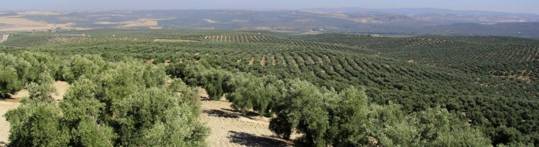 UPA-Jaén muestra su satisfacción por la ampliación del riego de apoyo hasta el 31 de octubre