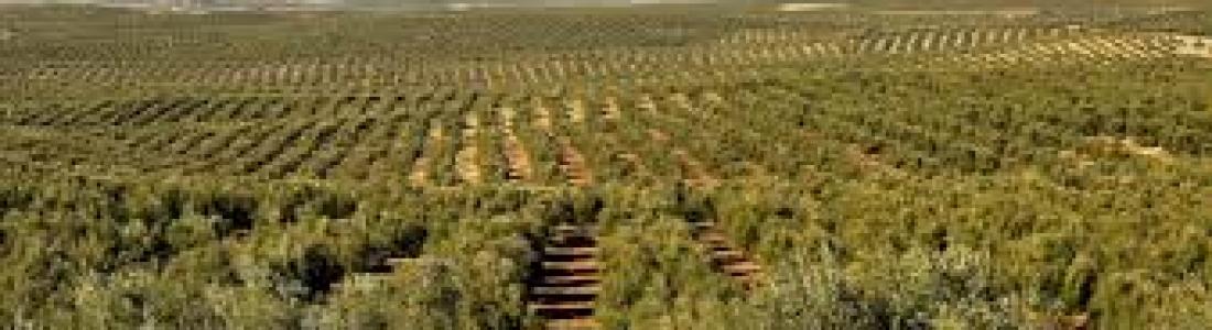 La UJA presenta en un encuentro trabajos sobre predicción de síntomas que pueden afectar a la producción del olivar