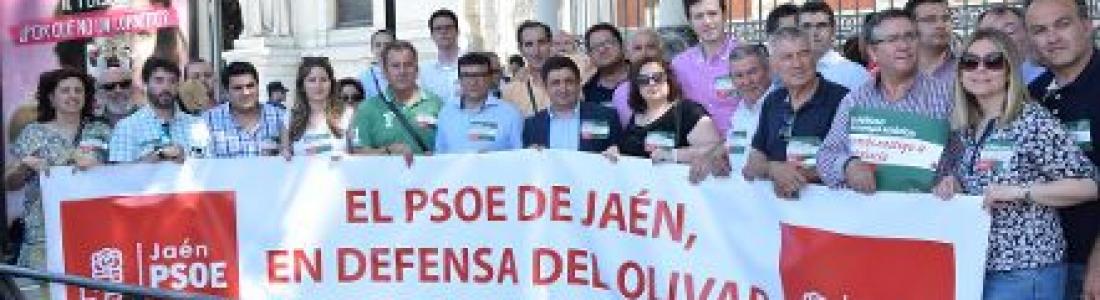 Alcaldes y cargos socialistas reivindican ante el Ministerio de Agricultura ayudas asociadas para el olivar en pendiente