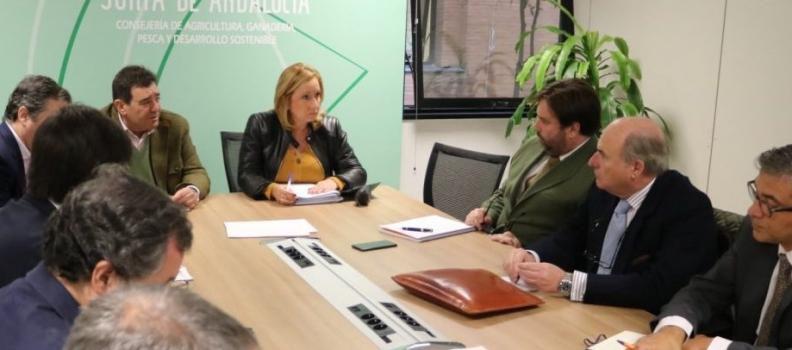 La Junta ofrece su apoyo a los agentes del sector del aceite de oliva que quieran presentar ofertas para el almacenamiento