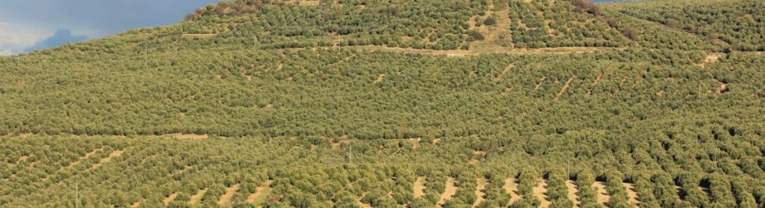 La reserva hidráulica española está al 69,1% de su capacidad total