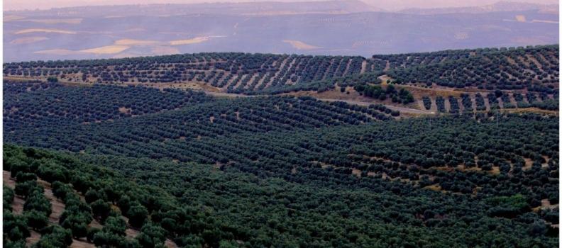 COAG-Jaén confía en la exención del IVA en la transmisión de derechos del pago único
