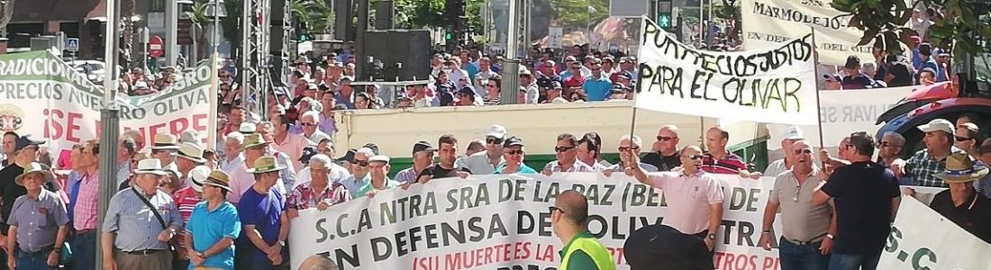 Miles de olivareros reclaman en Jaén medidas que pongan freno a la «ilógica caída» de precios del aceite de oliva en el mercado de origen
