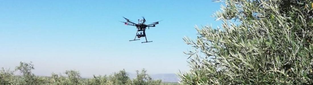 Presentan los resultados del Grupo Operativo de Agricultura de Precisión con Drones Aplicado al Olivar