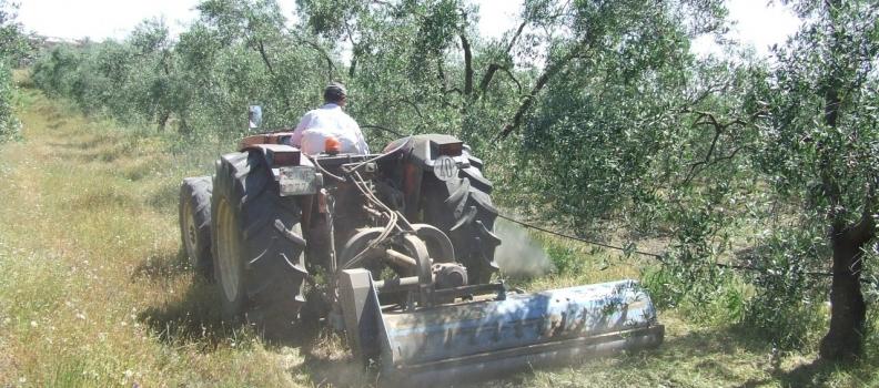 La apuesta de Andalucía por la producción ecológica hace crecer la superficie, el ganado y los operadores del sector